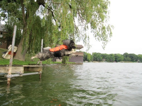 One of Clancy's first dock jumps....  July 2012