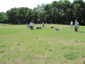 Dog parks offer fun socialization for both dogs and humans!