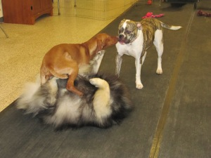 "Clancy and friends having a great time at ""Playtime"" which is held weekly at a local pet store."