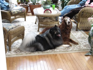 Clancy enjoying an outing at a family gathering and hanging out with a friend's dog. A well-behaved dog is often welcomed into friends and family's homes.
