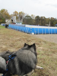 Clancy watching a Lab jump in the Extreme Vertical dock jumping competition