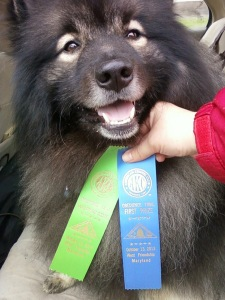 Though Clancy's keeshond sense of humor did come out during our first Obedience Novice trial, we still got our 1st leg of our CD and 1st place!