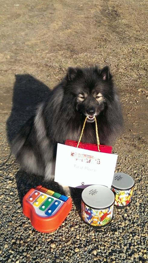Clancy wins 1st place at the 2014 Maryland DogFest talent show...  that's two years in a row! Here he is holding a gift bag with his 1st Place certificate next to two of his famous trick props.