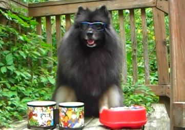 "Cool Clancy with his Bongos and ""Piano""...  did you see the ""Fluffy Dog Plays Bongos"" video yet on YouTube?  If not, click here!"