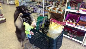 Clancy going shopping --  a scene from the trick video we're working on!