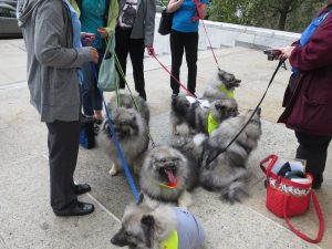 Rehabilitated Survivors of Marjorie's Kennel outside of New York's Capital Building helping to deliver the petition