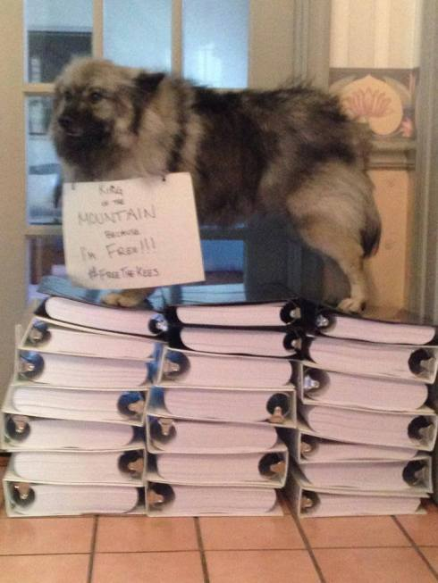 One of the lucky Kees that was rescued from Marjorie's Kennel in 2013 stands on the mountain of binders that contain 222,000+ signatures and tens of thousands of comments on the Free The Kees petition.