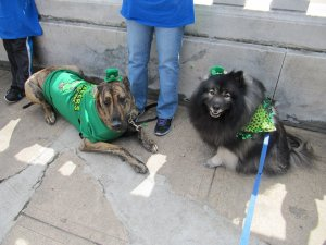 Clancy meeting new doggie friends while at a volunteer event