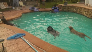 Doggie pool party!