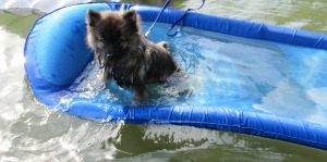 This has always been Clancy's favorite way to cool down.  What's your dog's fave way to beat the heat?