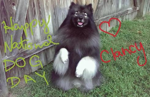 Clancy, the Keeshond, wishes his fellow doggie friends a Happy National Dog Day!