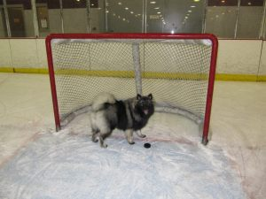 Young Clancy trying to be like his goalie