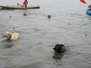 Clancy cooling off with other dogs at a pet fundraiser.
