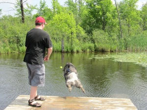 Clancy loves jumping off docks for fun!  Try it yourself at the amazing 24 acre Orion Oaks Dog Park in Lake Orion, Michigan, which offers a large dock with ramps into a lake for the dogs.