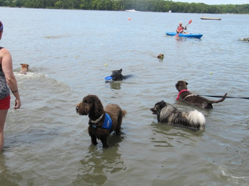 Who do you think was the fluffiest dog in the Chesapeake Bay doing the SPCA