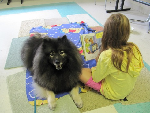 Clancy in his therapy dog role at the library. He provided a friendly, furry and non-judgmental ear to children helping them with their reading skills.