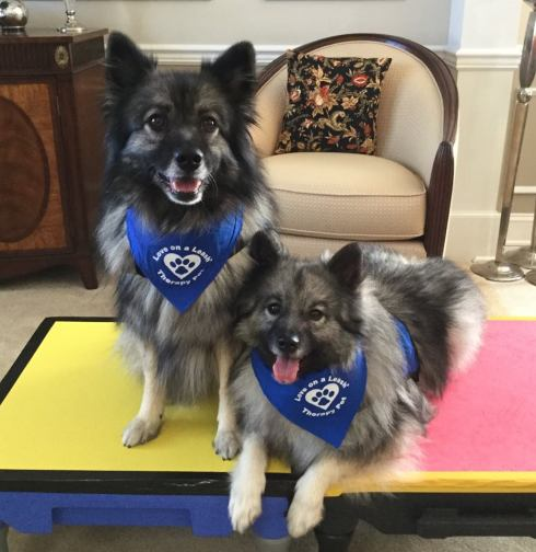Kallie and Reggie therapy dogs