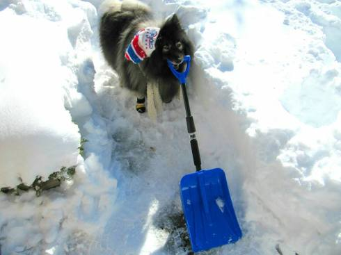 Clancy snow shovel 2