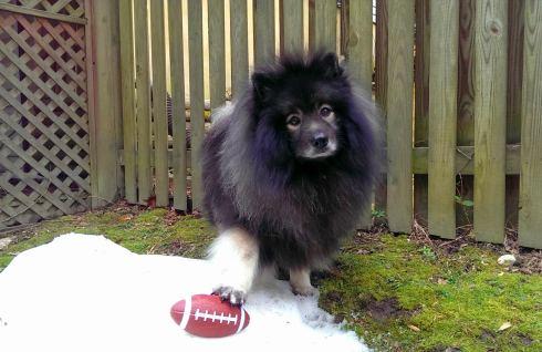 Clancy dog Football snow hike