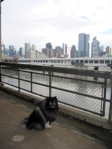 clancy-nyc-pier-1-sit